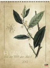 Pflanzen aus der Welt der Bibel 2019