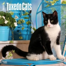 Browntrout Publishers, Inc Tuxedo Cats 2017 Square