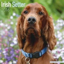 Avonside Publishing Ltd. Irish Setter Calendar 2016