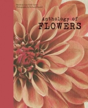 Jane,Field-lewis Anthology of Flowers