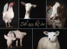 Karolien  Hupkes, Brenda  Beumer,Ode aan het vee