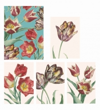 Rhs Tulips Boxed Notecards
