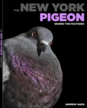 Andrew,Garn New York Pigeon