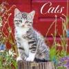 Cats 2021, Broschürenkalender mit Ferienterminen. Katzen und Kätzchen