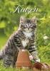 ,Katzen 2018 Kalender