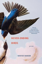 David Baker Never-Ending Birds