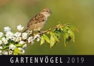 Gartenvögel 2019