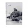 ,<b>Agenda 2020 Lannoo My favourite friends cat grijs</b>