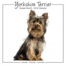 Avonside Publishing Ltd. Yorkshire Terrier Studio Calendar 2016