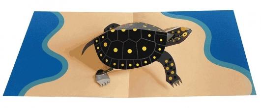 2totango Turtle