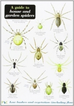Richard Lewington A Guide to House and Garden Spiders