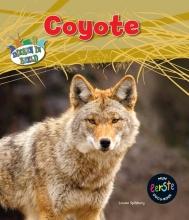Louise Spilsbury , Coyote