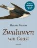 Theunis  Piersma,Zwaluwen van Gaast